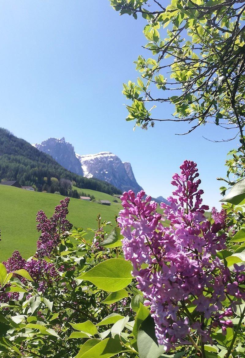 Vacations around Castelrotto